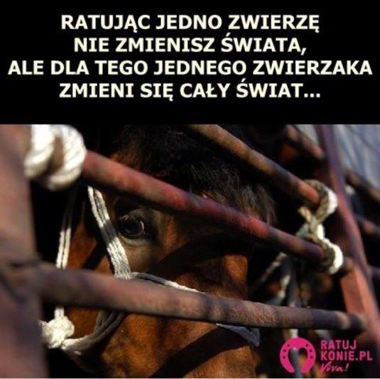 konie (1)
